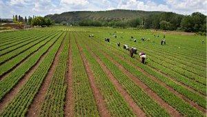 Bakan Pakdemirli: Fidan üretimi, son 16 yılda ortalama 350 milyona yükseldi