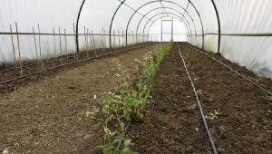 Topraksız Tarım Tesisi'nde deneme ekimleri başladı