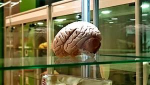 Beyin implantları hafızayı yüzde 20 arttırıyor