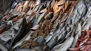 Torik ve tombik balığını palamut diye satıp vatandaşı kandırıyorlar