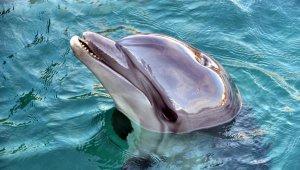 Yunus Parkları turizmcilerin yüzünü güldürdü