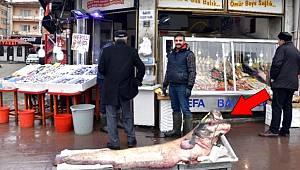 Zıpkınla yakalanan dev yayın balığı görenleri şaşırttı