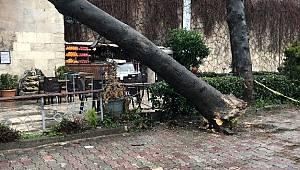 Çatısına ağaç düşen 234 yıllık tarihi sebil zarar gördü