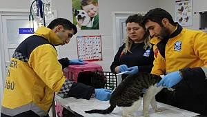 Eyüpsultan'da 2019 yılında 6 bin sokak hayvanı tedavi edildi