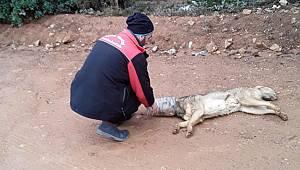 Zor durumdaki sokak köpeğini Kartal Belediyesi kurtardı