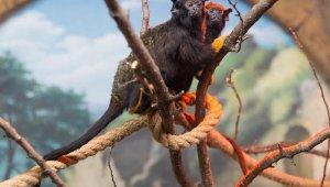 Akrep Mahmut, Tarantula Pepe…Kendileri de beslenmeleri de özel