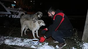 Kartal Belediyesi sokak hayvanlarının yanında