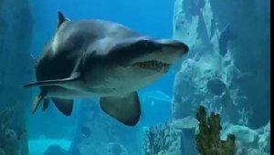 Akvaryum'da 'Keşkül'ün Dev Köpek Balığı ile Karşılaşması Herkesi Güldürdü
