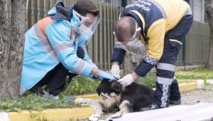 Beşiktaş Belediyesi 'Mobivet' ile sokak hayvanlarını yalnız bırakmadıklarını duyurdu