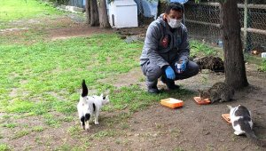 Kağıthane'de sokak hayvanları anlamlı günde unutulmadı