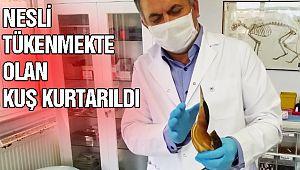 Pandemi Sürecinde Hayvanlar İhmal Edilmiyor!