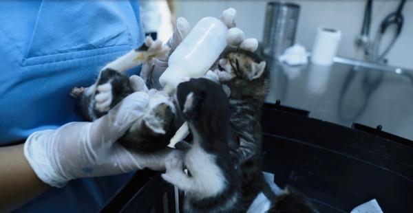Anneleri Ölen Beş Yavru Kediye Ekiplerden Yardım Eli