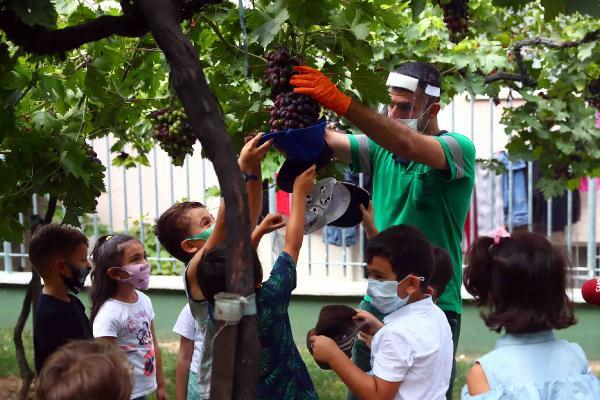 Minikler Üzüm Bağı'nda Hasat Yaptı
