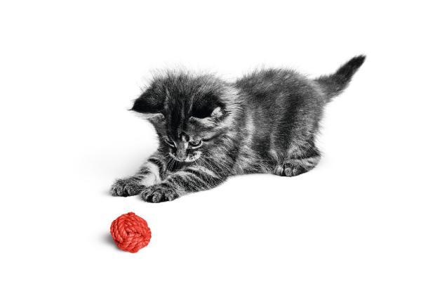 """""""Pandemide Kedi Sahipleri Kendilerini Daha Az Yalnız Hissetti"""""""