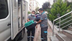 Çatıdaki yaralı martıya belediye yardıma koştu