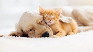 İlginç araştırma: Evcil hayvanı olanlar daha çekici