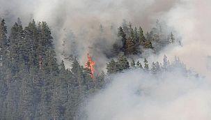 Kastamonu'da iki farklı noktada yangın çıktı