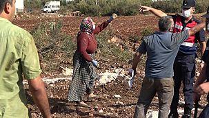 Kesilen zeytin ağaçları akrabaları birbirine düşürdü