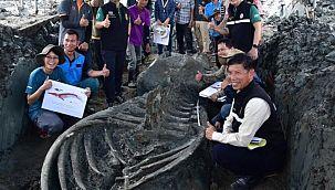 5 bin yıllık balina fosili bulundu