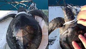 Yavru caretta carettayı balıkçılar kurtardı