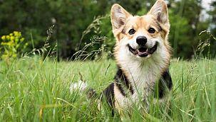 Köpek adları da coronadan etkilendi