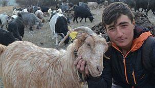 7 yaşından beri çobanlık yapıyor