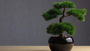 Bonsai bakımı, çoğaltması nasıl yapılır?