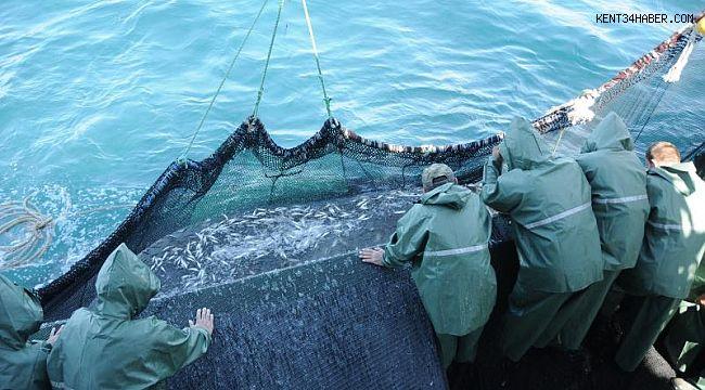 Karadeniz'de bir ilk; balıklar tersine göçe başladı