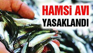 """Karadeniz ve İstanbul Boğazı'nda """"Hamsi Avı"""" Yasaklandı!"""
