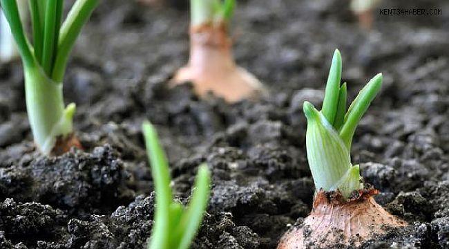 Organik tarım yüzde 46 arttı