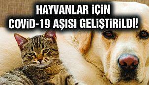 Hayvanlar İçin Kovid-19 Aşısı Üretildi!