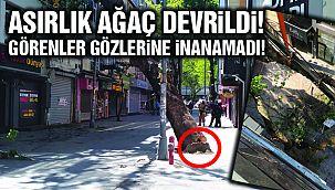 Asırlık Çınar Ağacı Dükkanların Üzerine Devrildi!